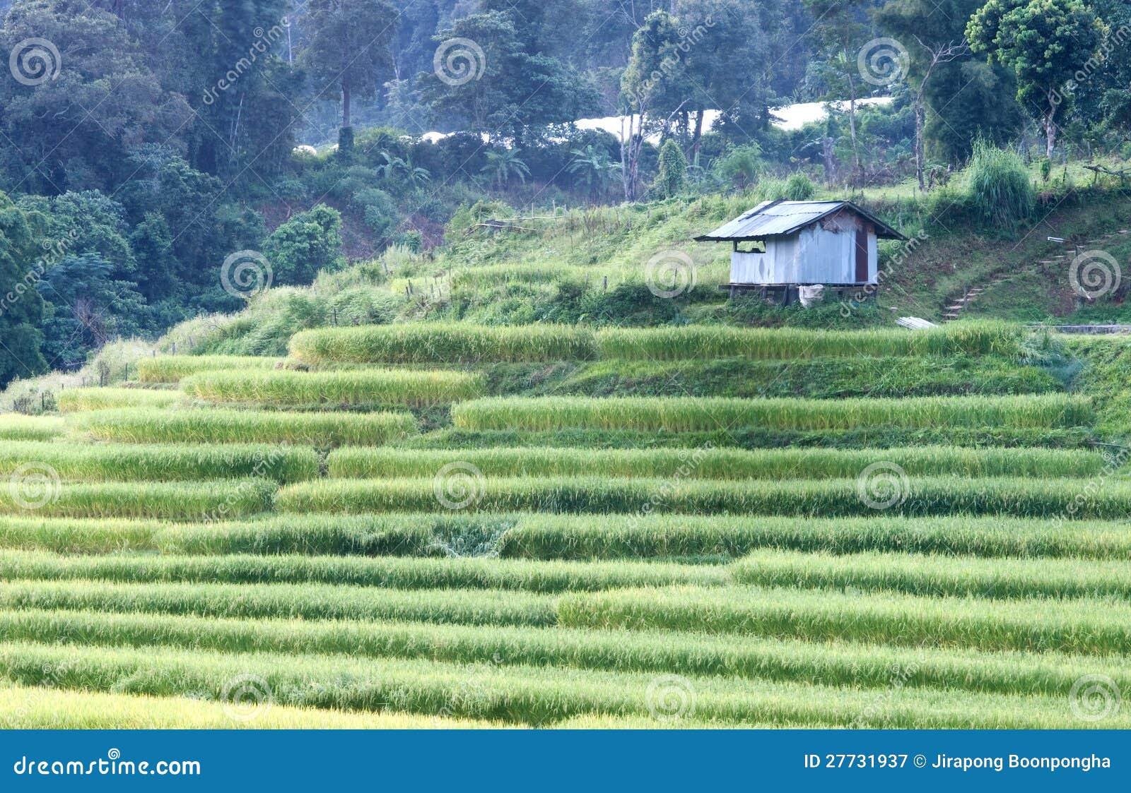 Terrasse des Reises Thailand