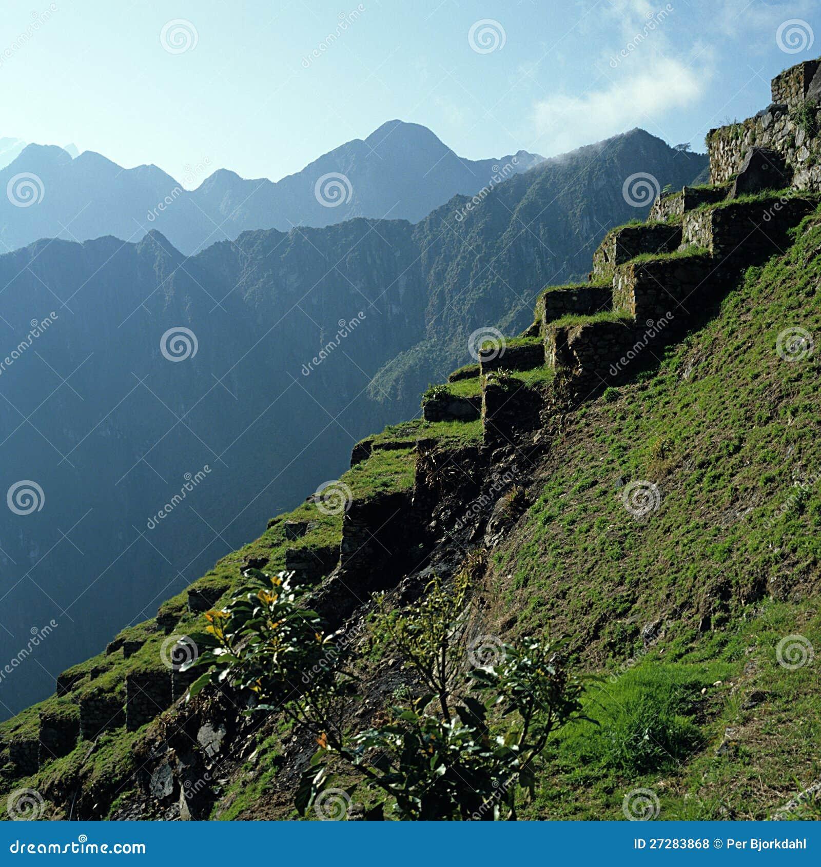 Terrasser Machu Picchu