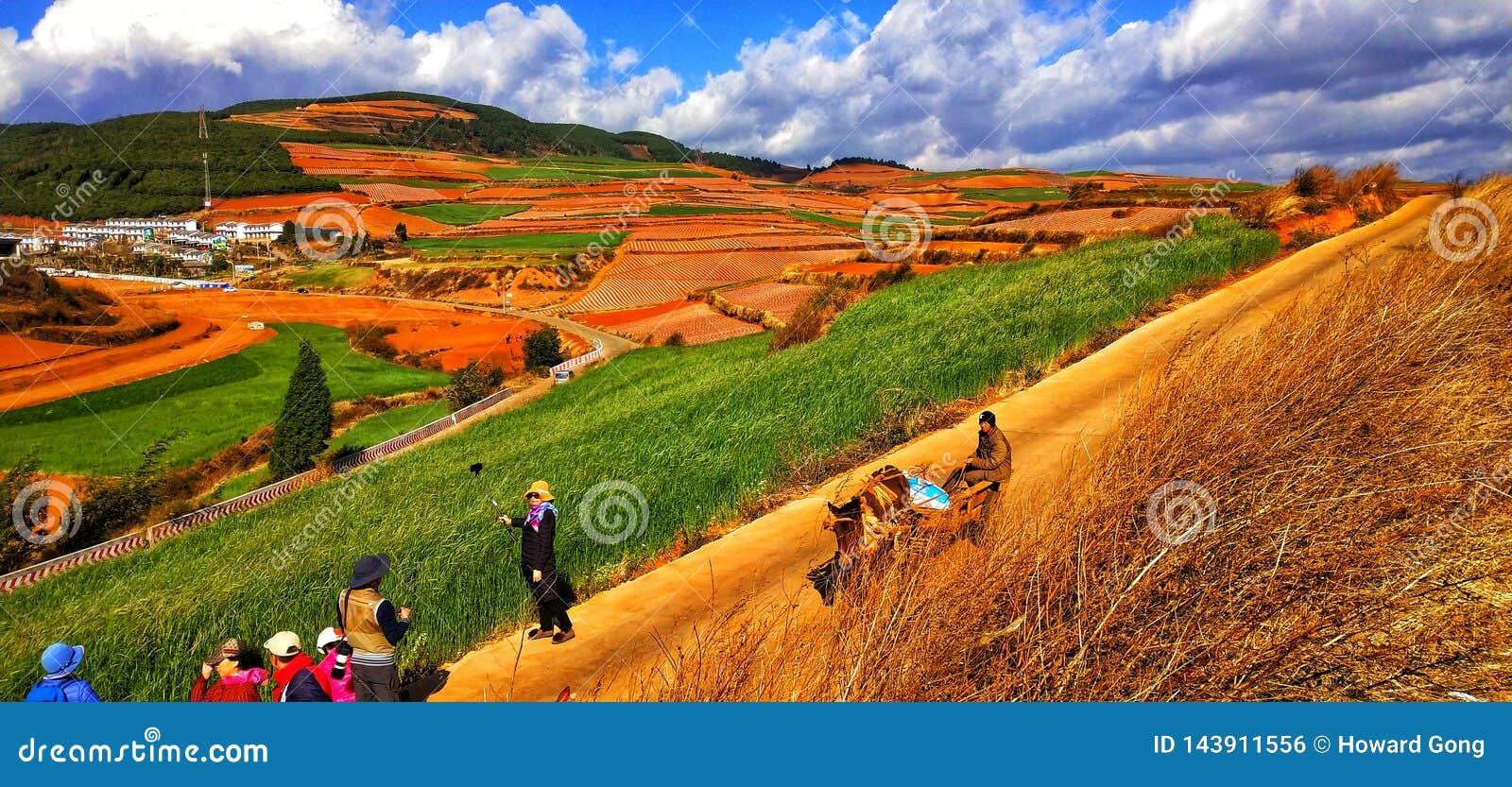 Terrasses colorées de riz dans la province de Yunnan, Chine