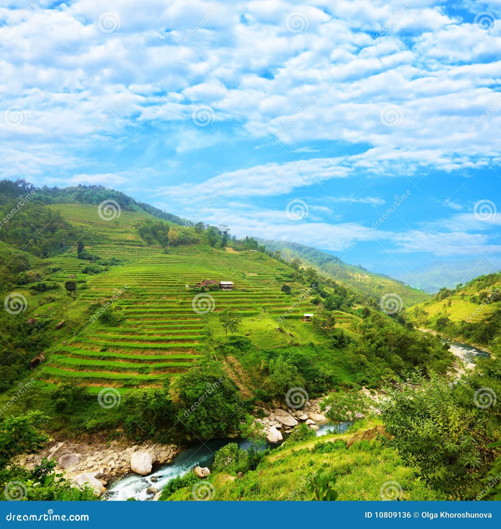 Terrasses de gisement de riz