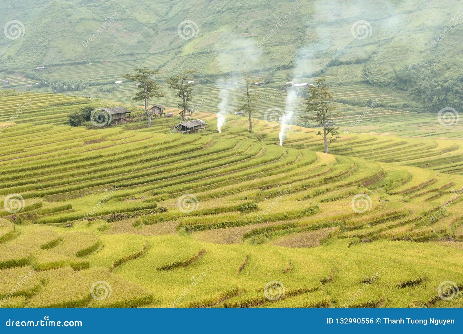 Terrasses de riz au Vietnam du nord-ouest
