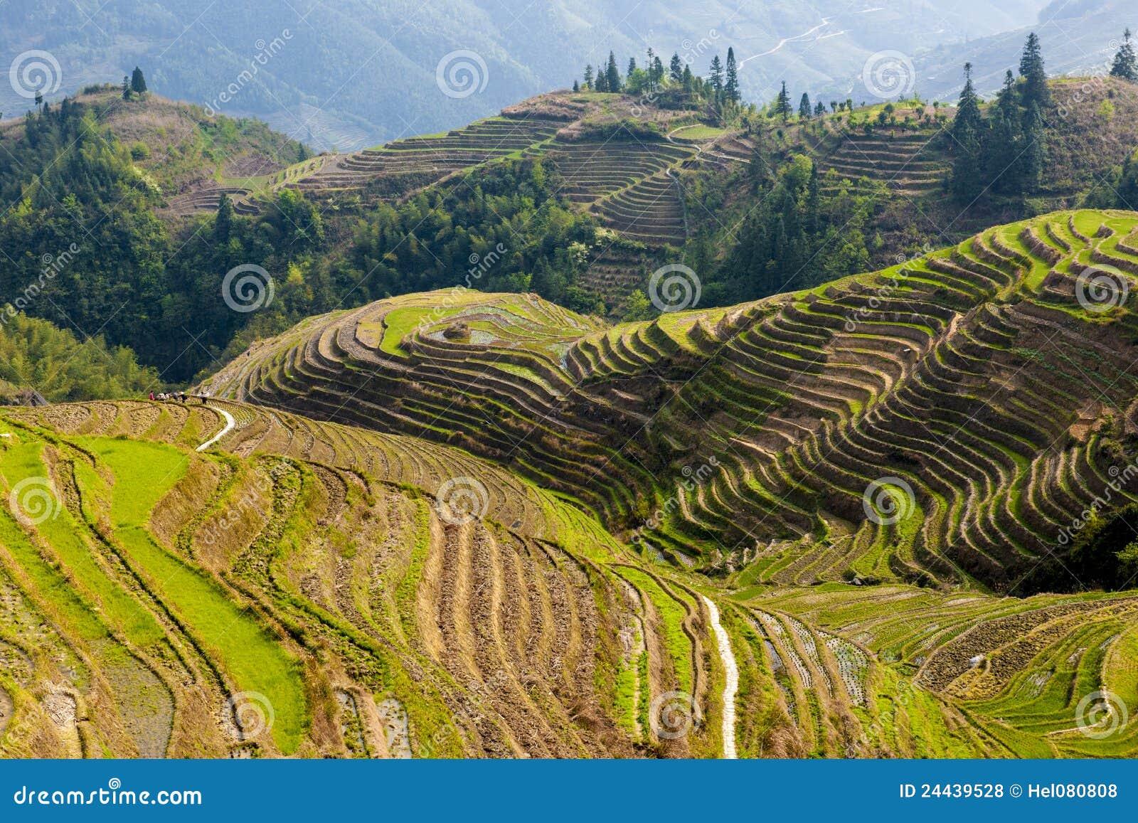 Terrasses de riz dans Longsheng, Chine