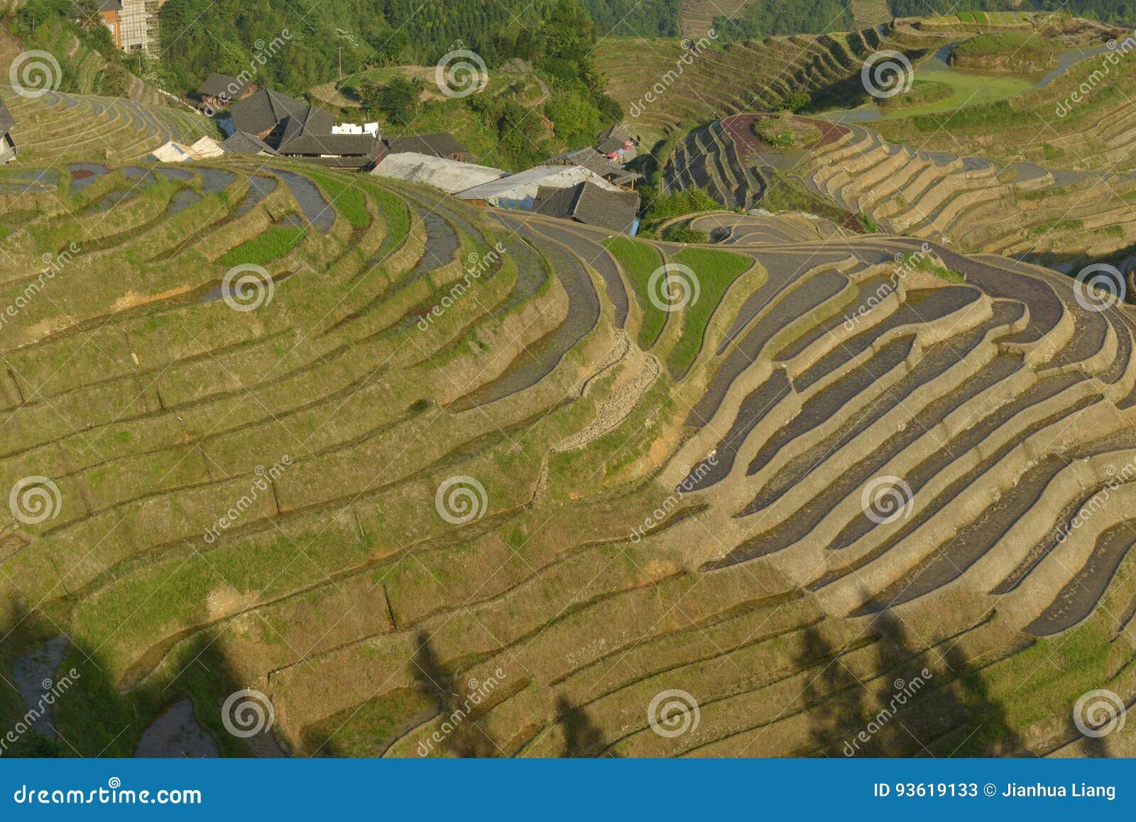 Terrasses de riz de Longji, province de Guangxi, Chine