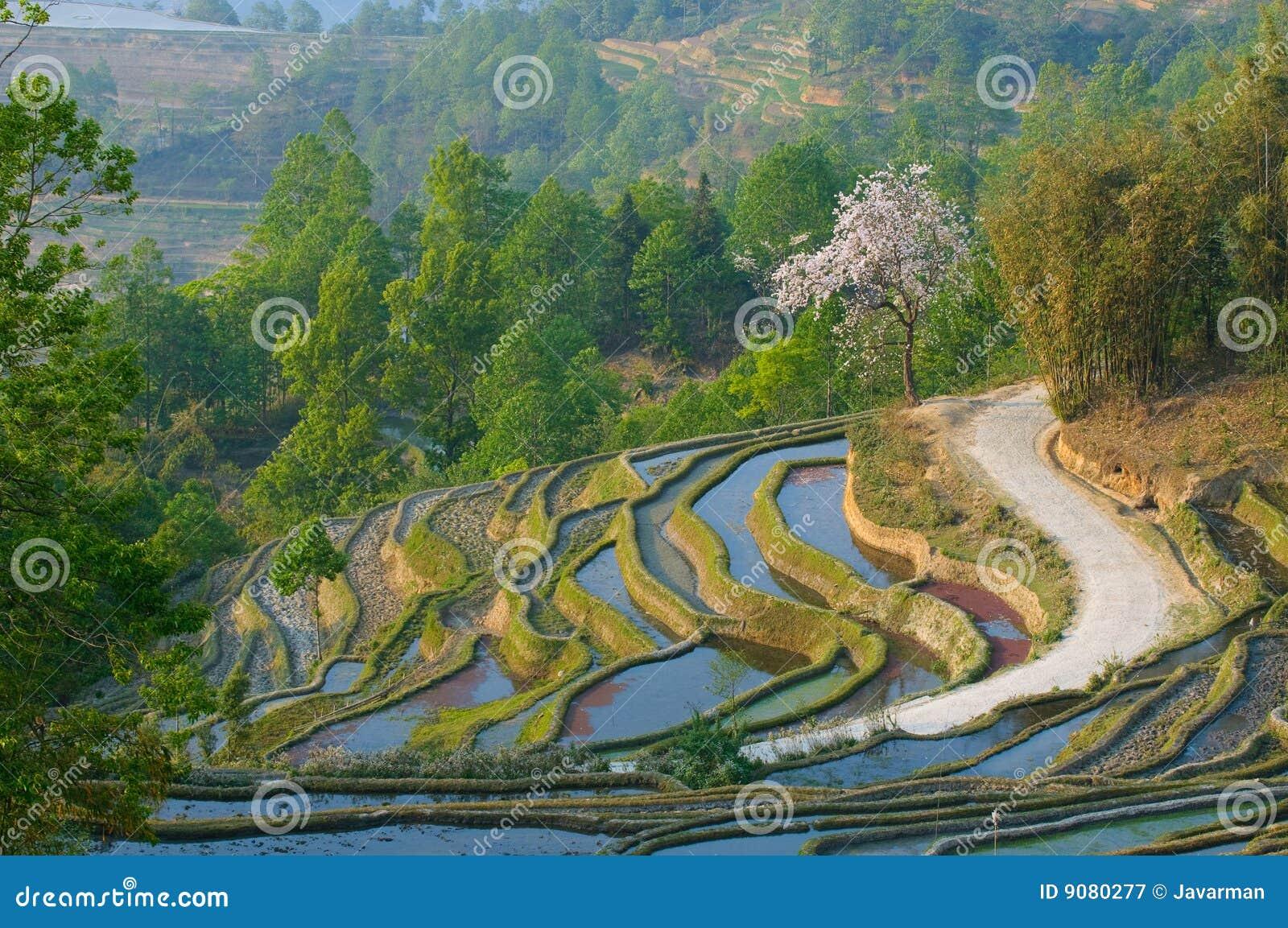 Terrasses de riz de yuanyang, yunnan, porcelaine
