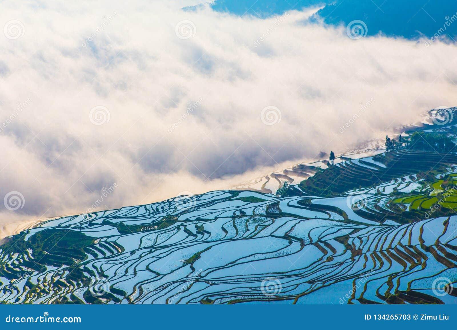 Terrasses de riz de Yuanyang en Chine