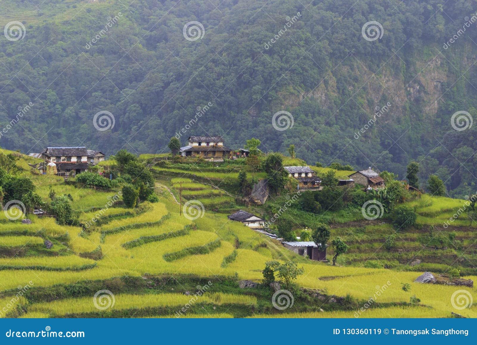 Terrasses, gisements de riz et villages en Himalaya