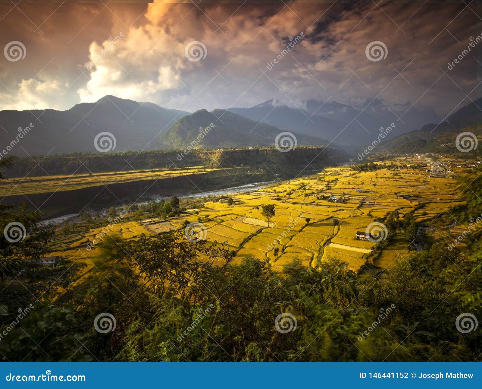 Terrasvormig Paddy Field in kandakki Nepal