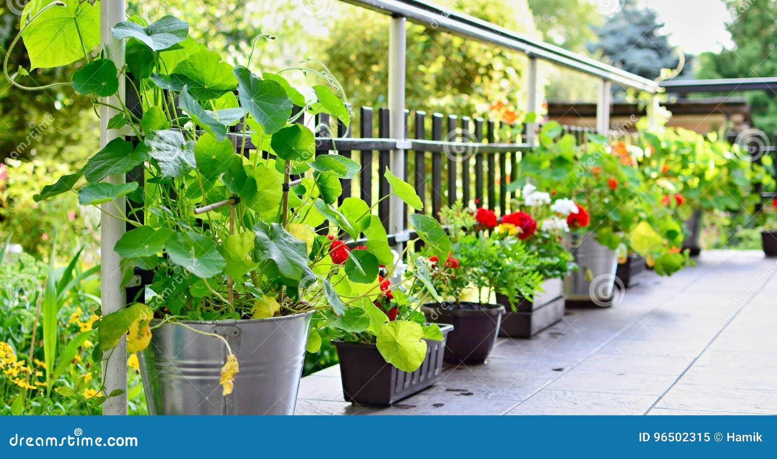 Terraza Con Las Flores Imagen De Archivo Imagen De