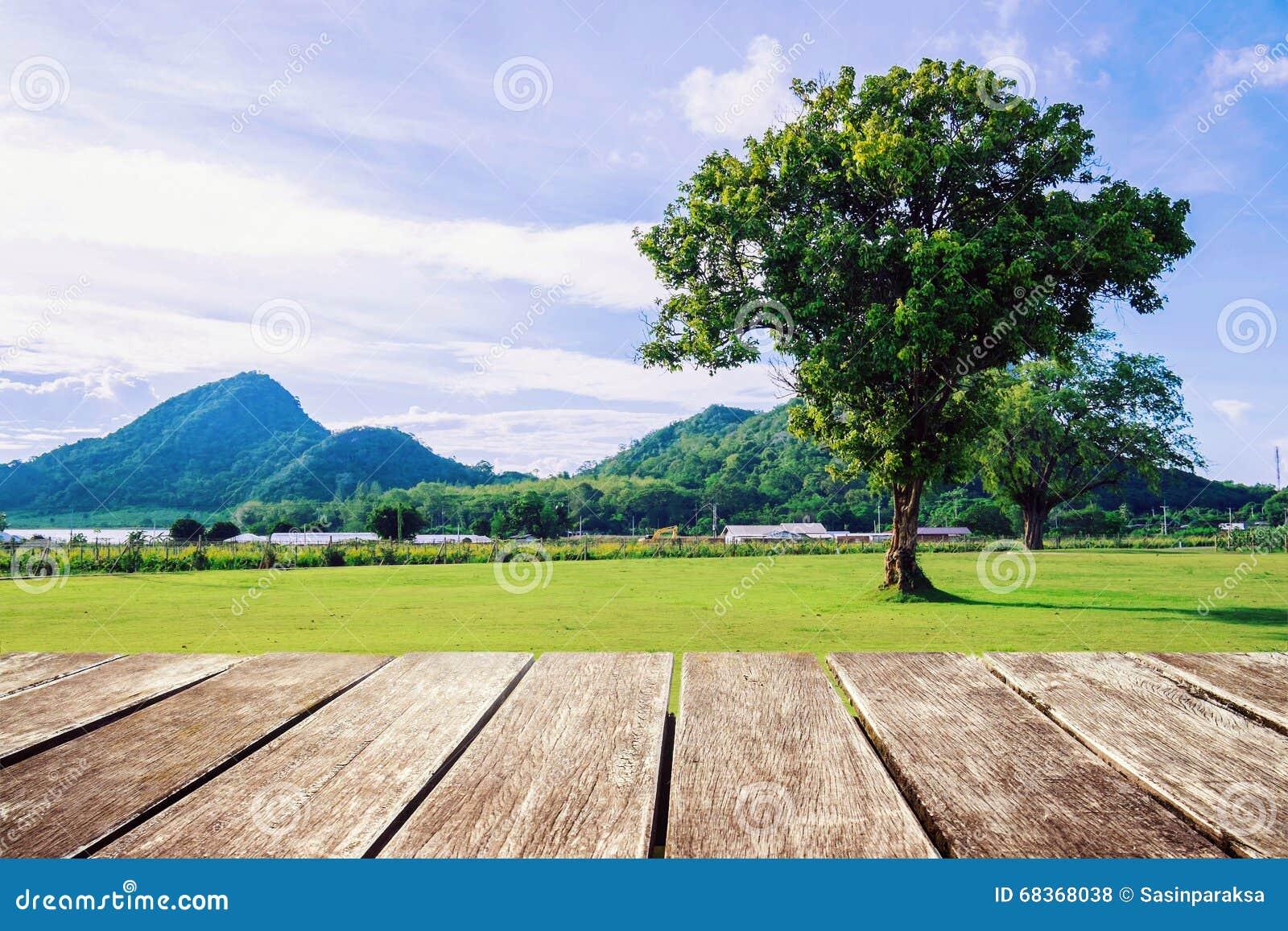 Terraza De Madera Con La Visión Natural Y El Solo árbol Foto