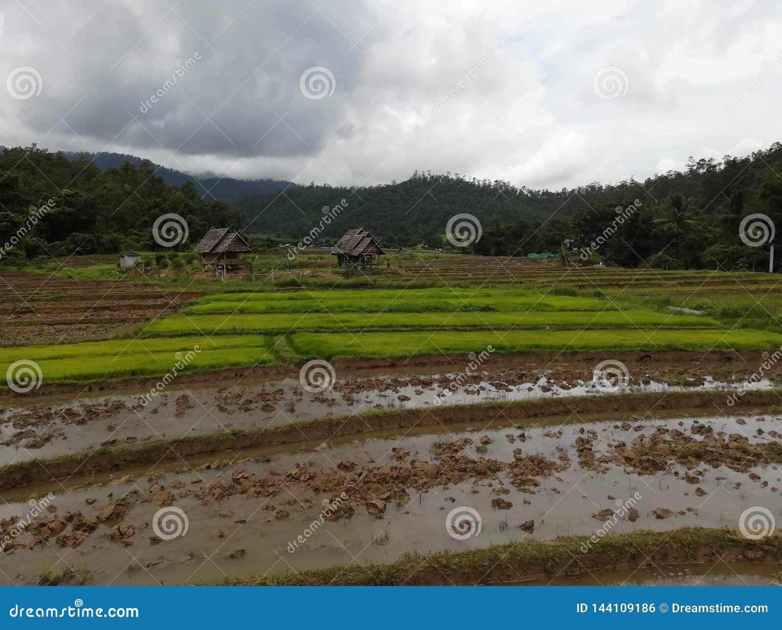 Terraza Del Arroz Tailandia Del Norte Pai Foto De Archivo