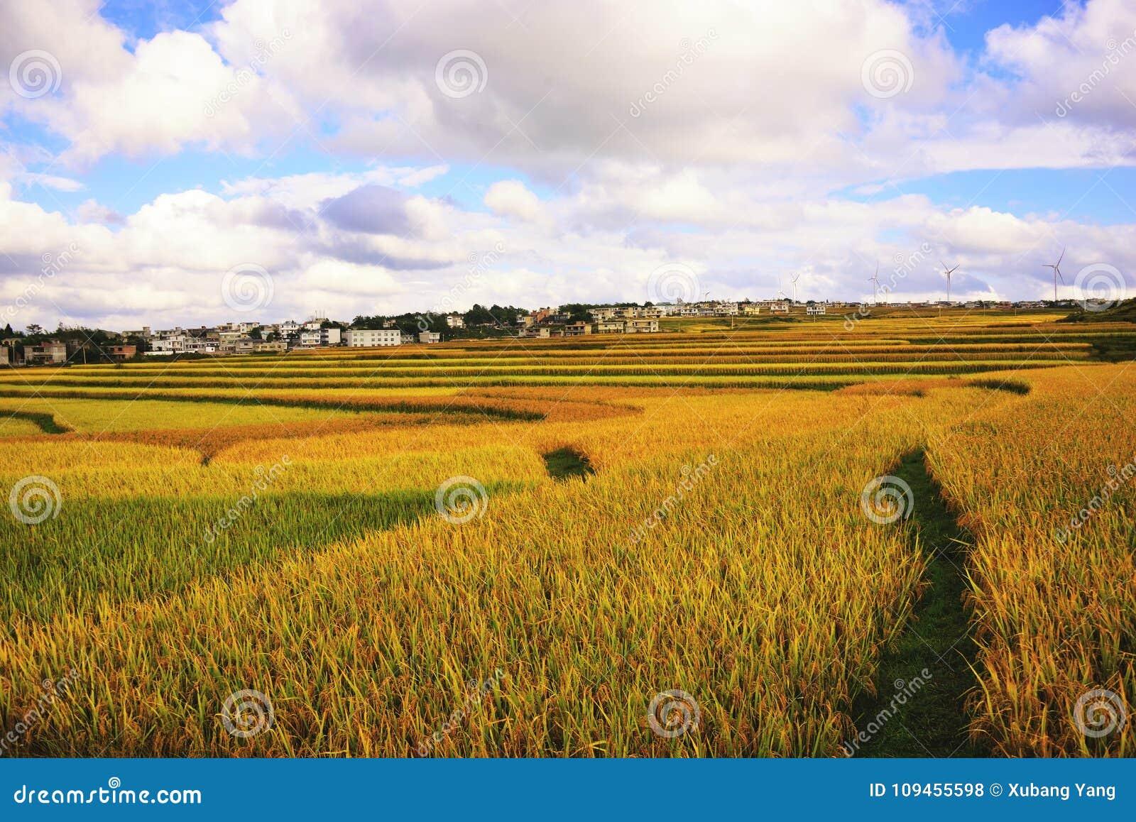 Terraza en China de Guizhou