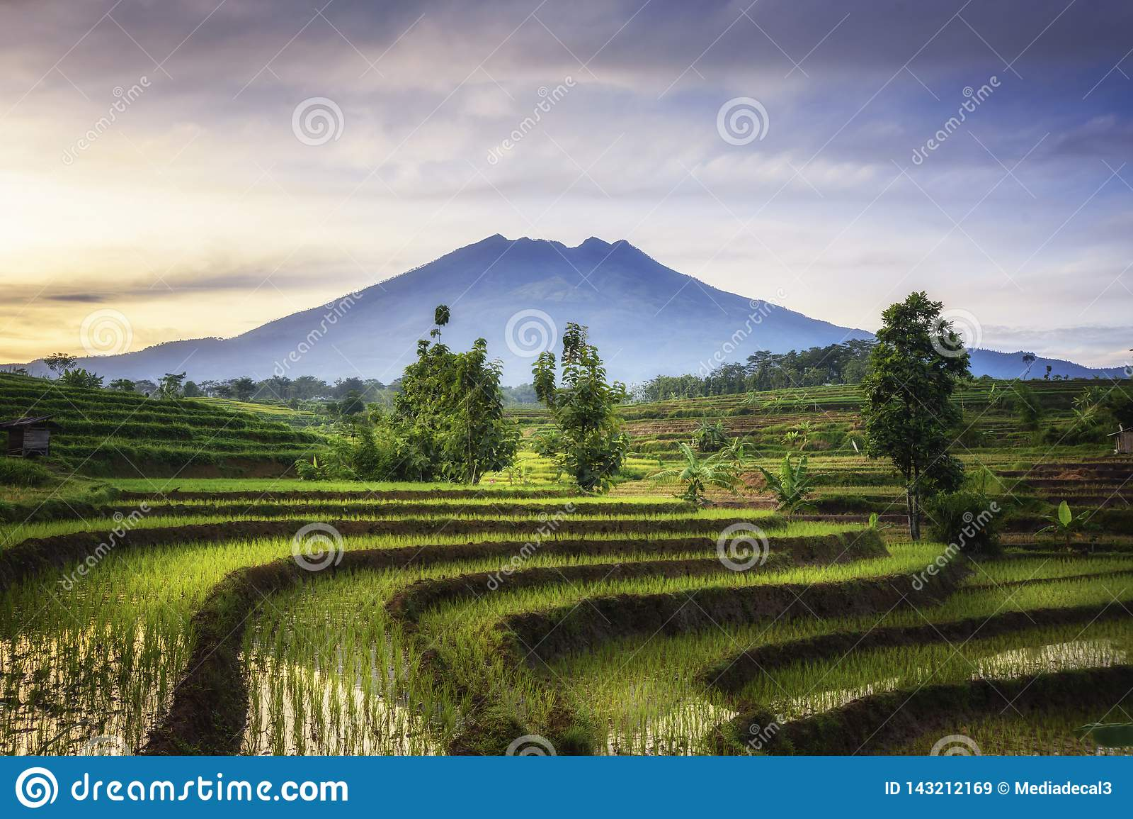 Terraza hermosa del arroz en Ngawi Indonesia