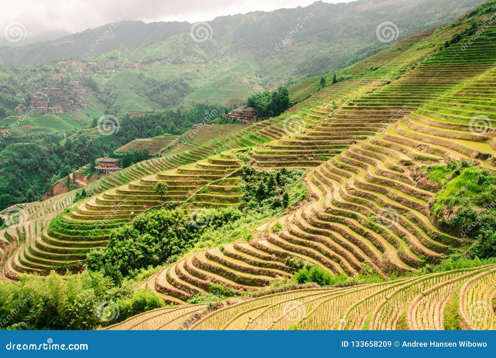 Terrazas Del Arroz De Longji De Longsheng En Guilin China