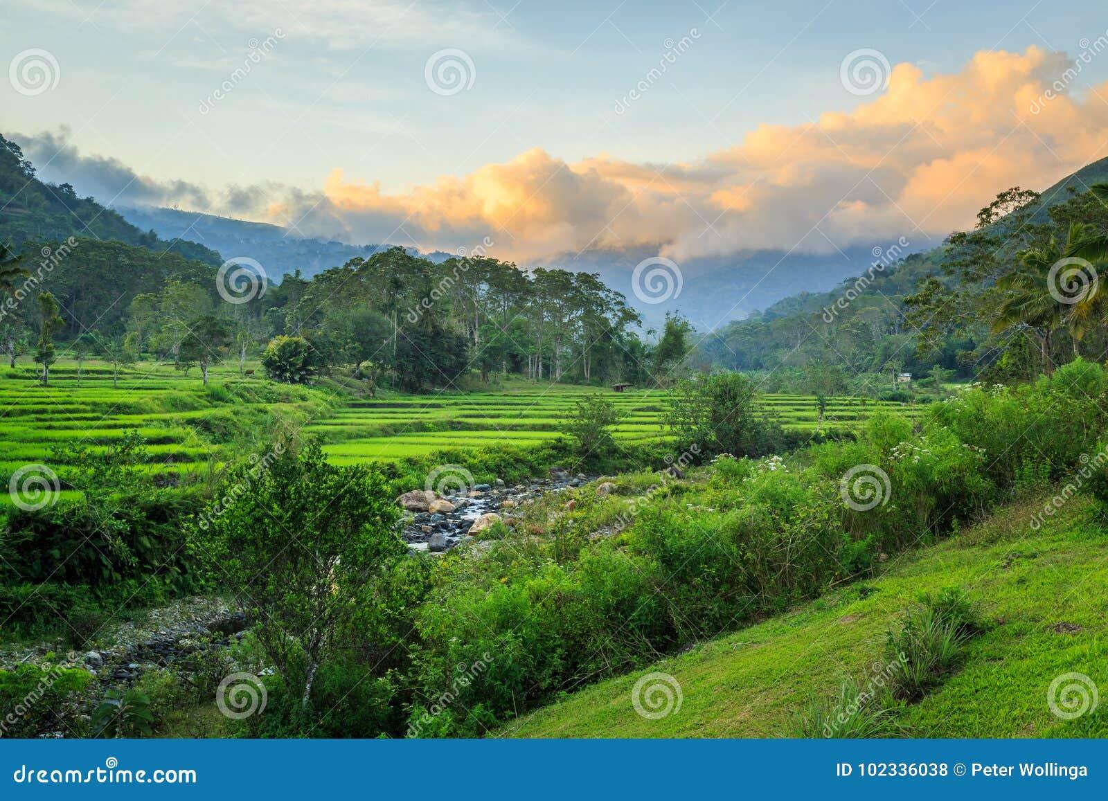 Terrazas Verdes Hermosas Del Arroz En La Puesta Del Sol Foto