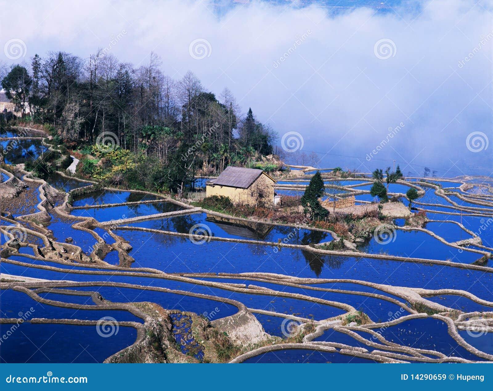 Terrazzi blu del riso di yuanyang