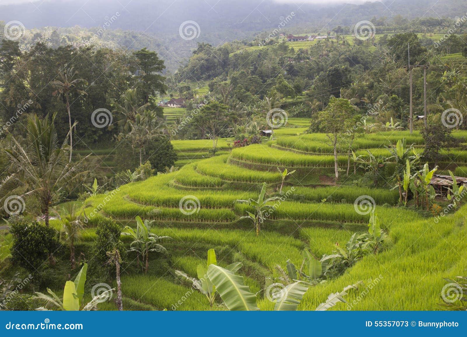 Terrazzi del riso