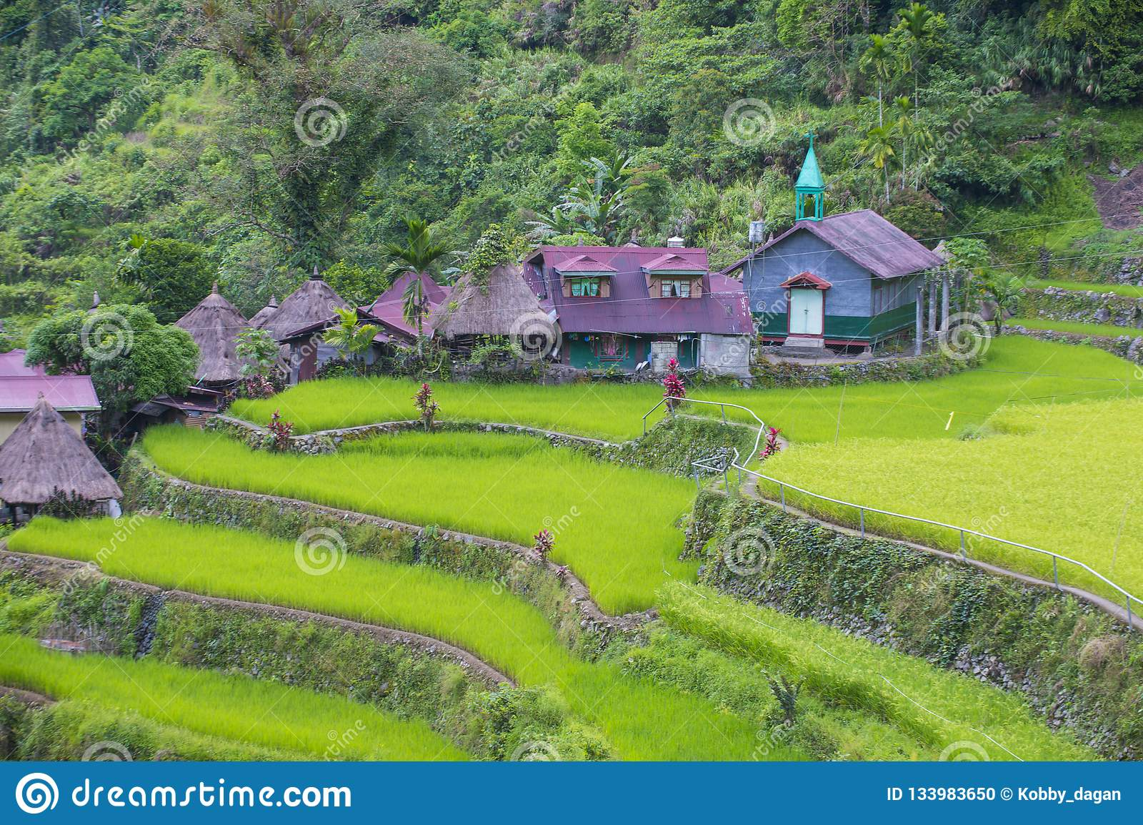 Terrazzi del riso in Banaue le Filippine