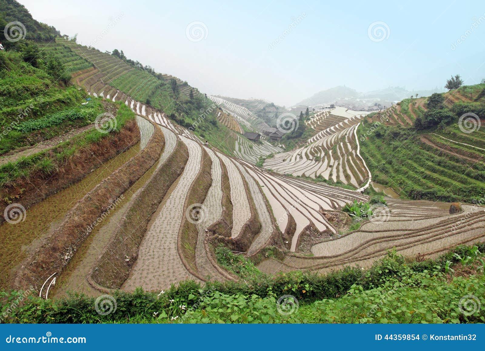 Terrazzi del riso di Longji, provincia di Guangxi