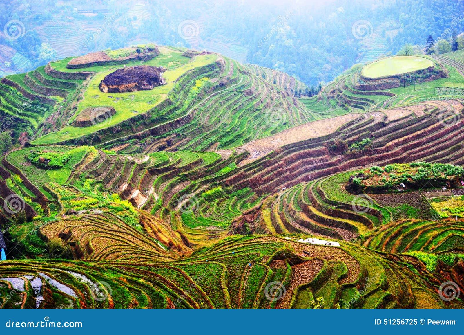 Terrazzi del riso di Longsheng