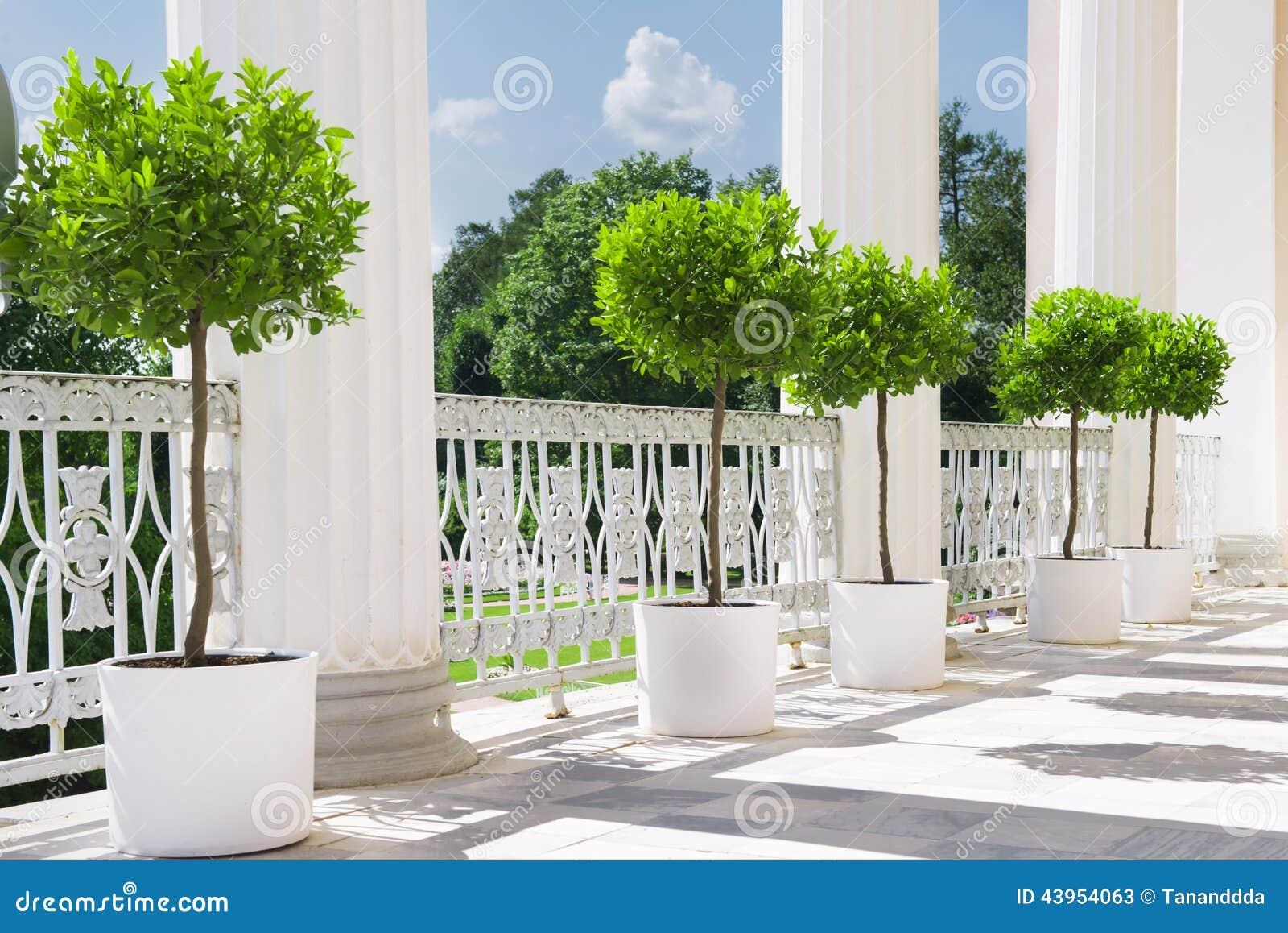 Terrazzo bianco di estate con la pianta in vaso vicino all for Pianta con la p