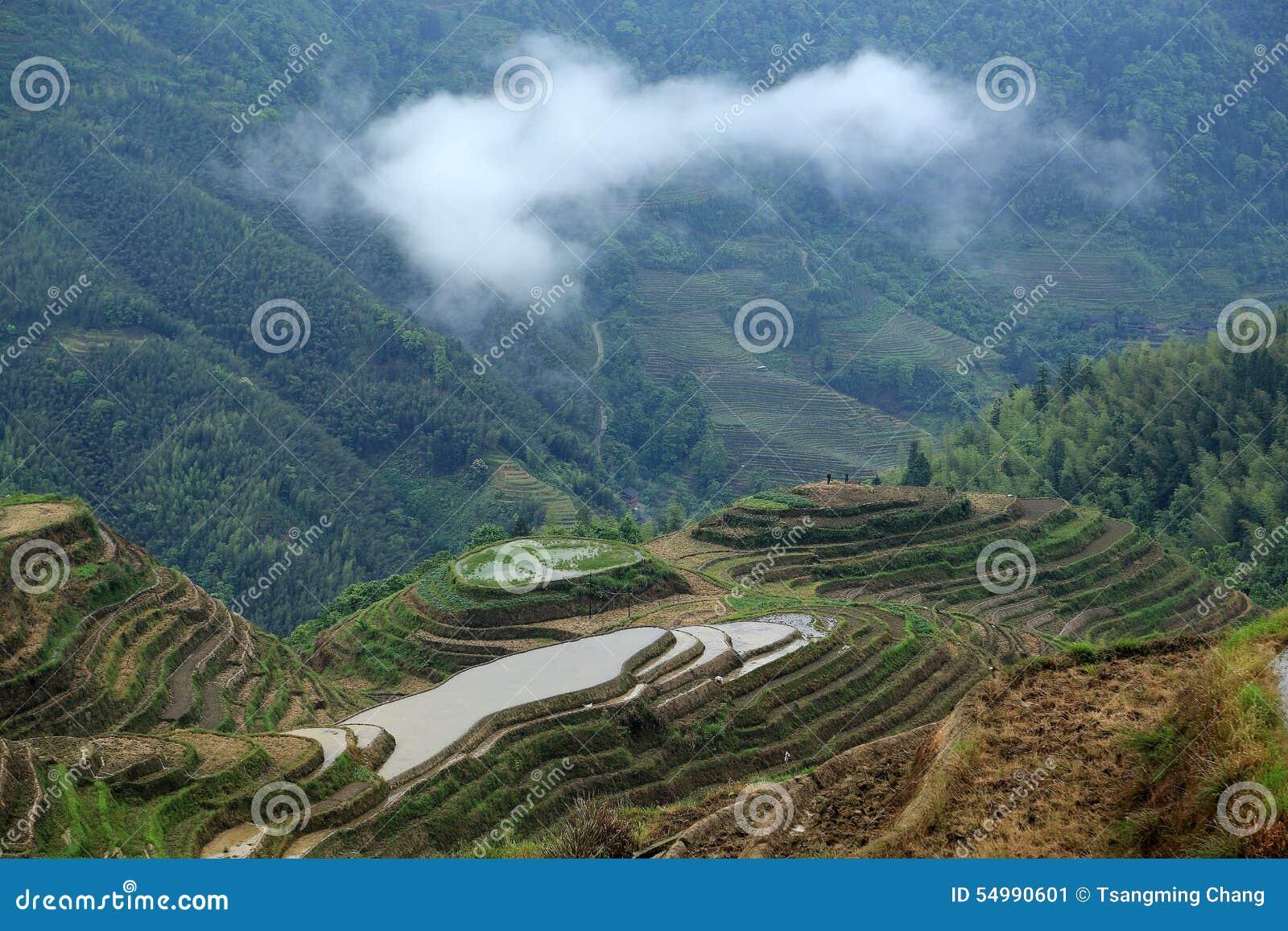 Terrazzo di Longji, il Guangxi, porcellana