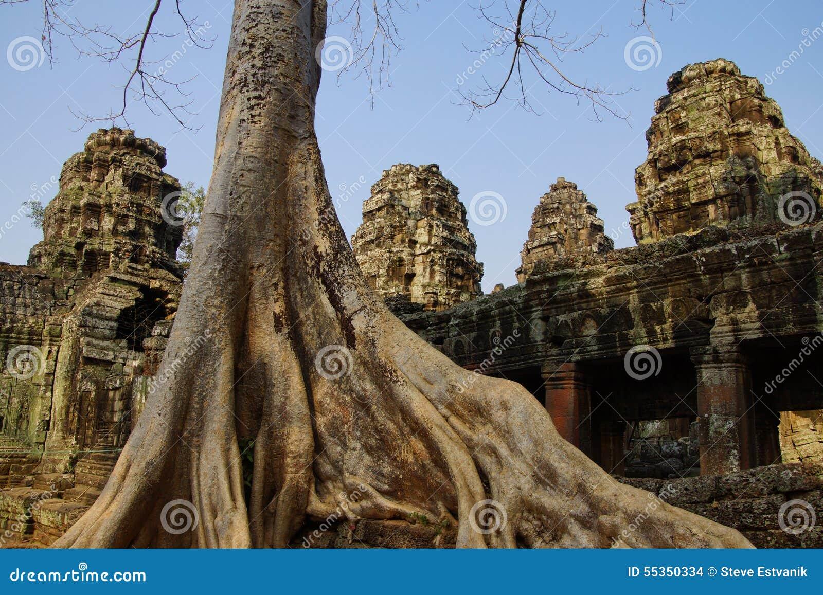 Terrazzo di pietra inghiottito dall albero enorme
