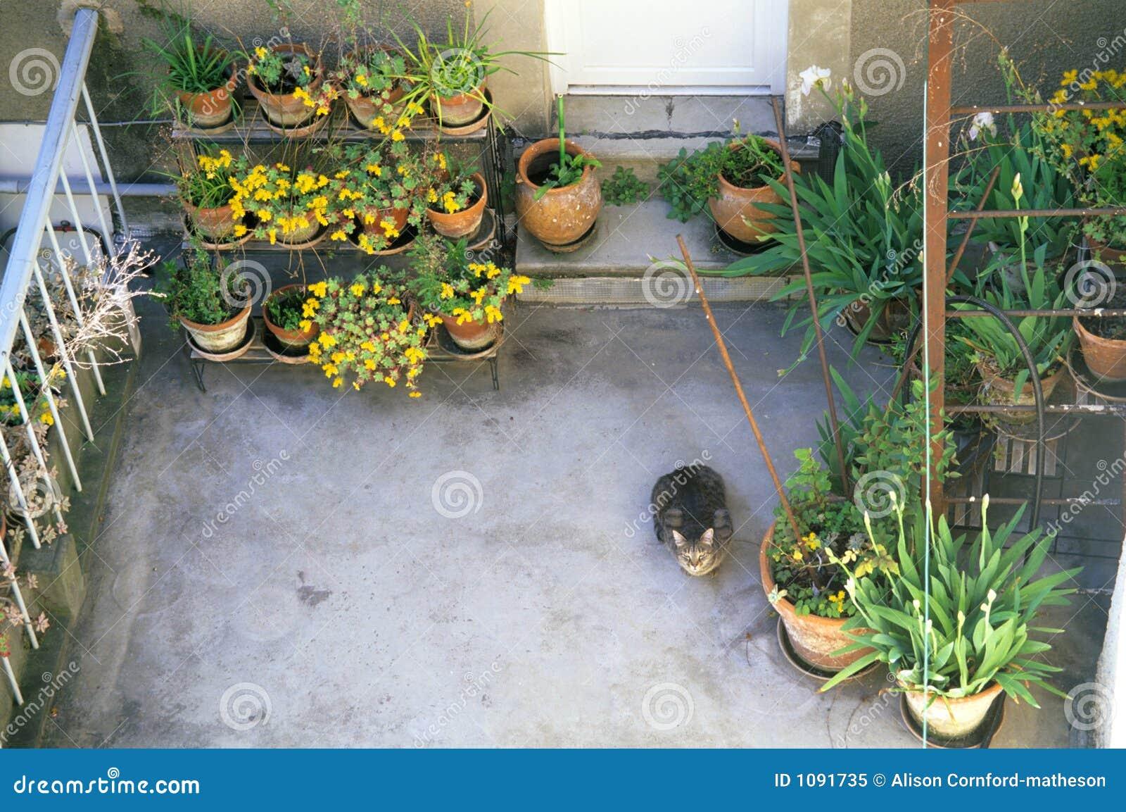 Terrazzo Fiorito Con Il Gatto Curioso Immagine Stock - Immagine di ...