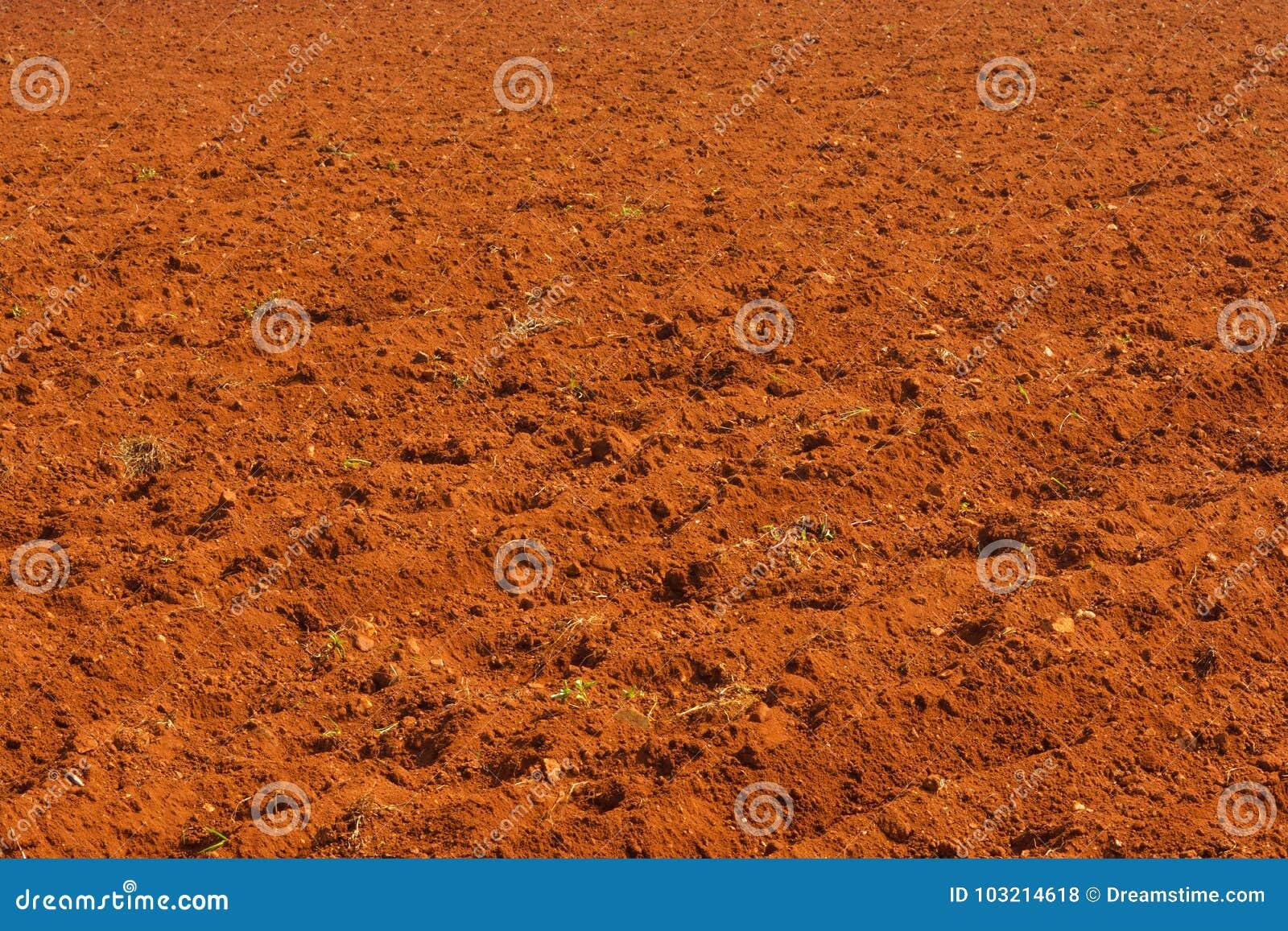 Terre cultivée dans l Inde