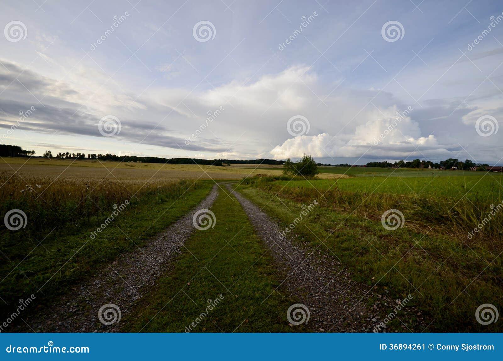Download Terreno agricolo immagine stock. Immagine di paese, agricolo - 36894261