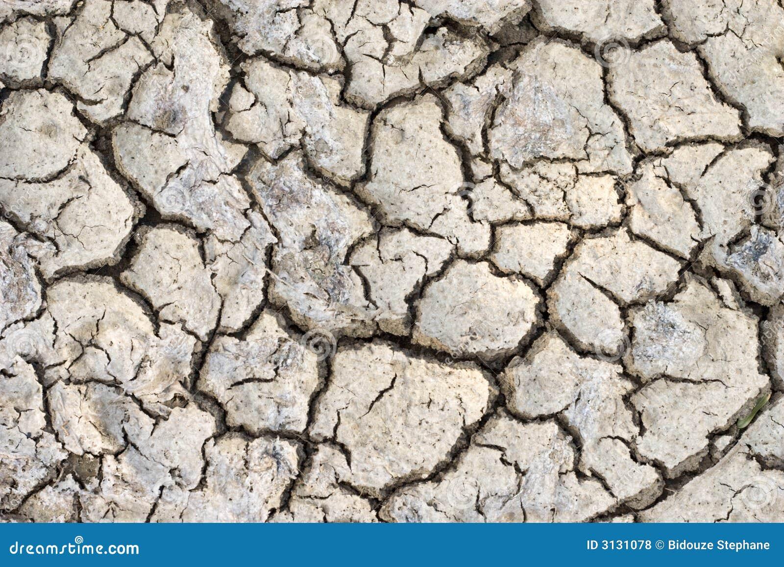 Terreno asciutto