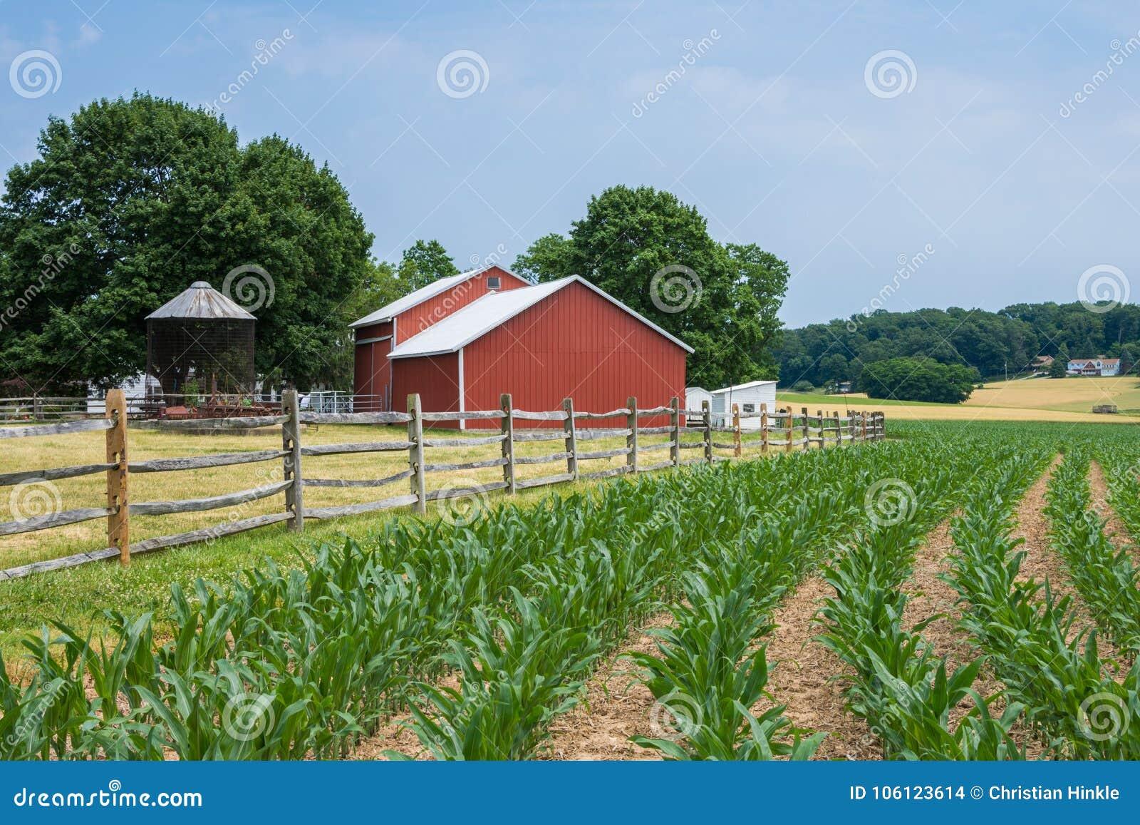 Terreno coltivabile rurale della contea di York Pensilvania del paese, un giorno di estate