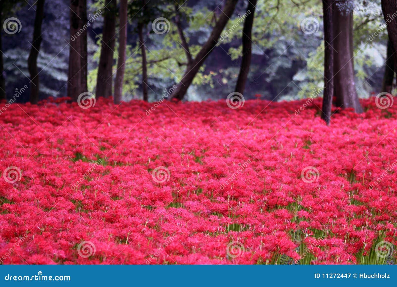 Terreno coperto in fiori rossi