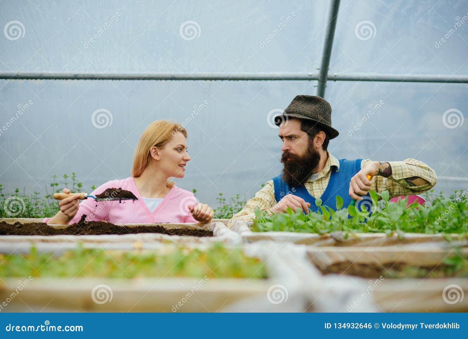 Terreno fertile suolo fertile per la piantatura degli alberi in serra produzione del suolo fertile donna ed uomo che lavorano con