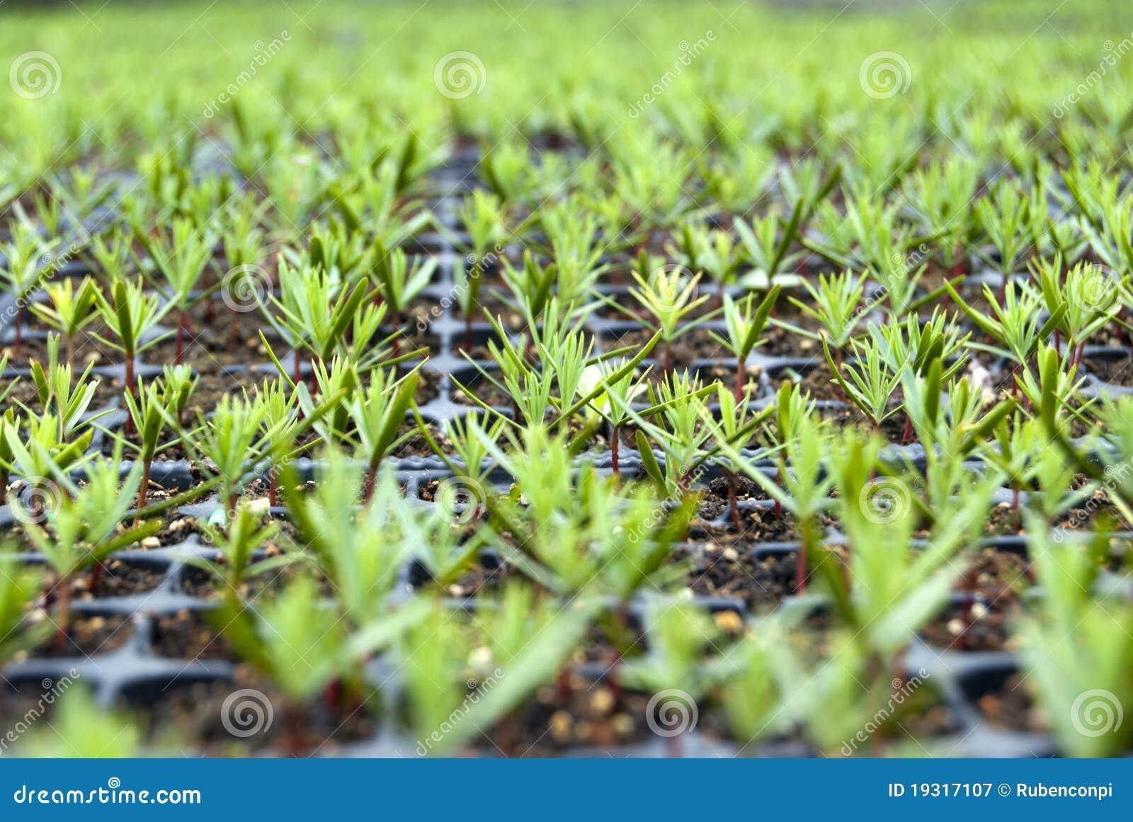 Terrenos do cipreste
