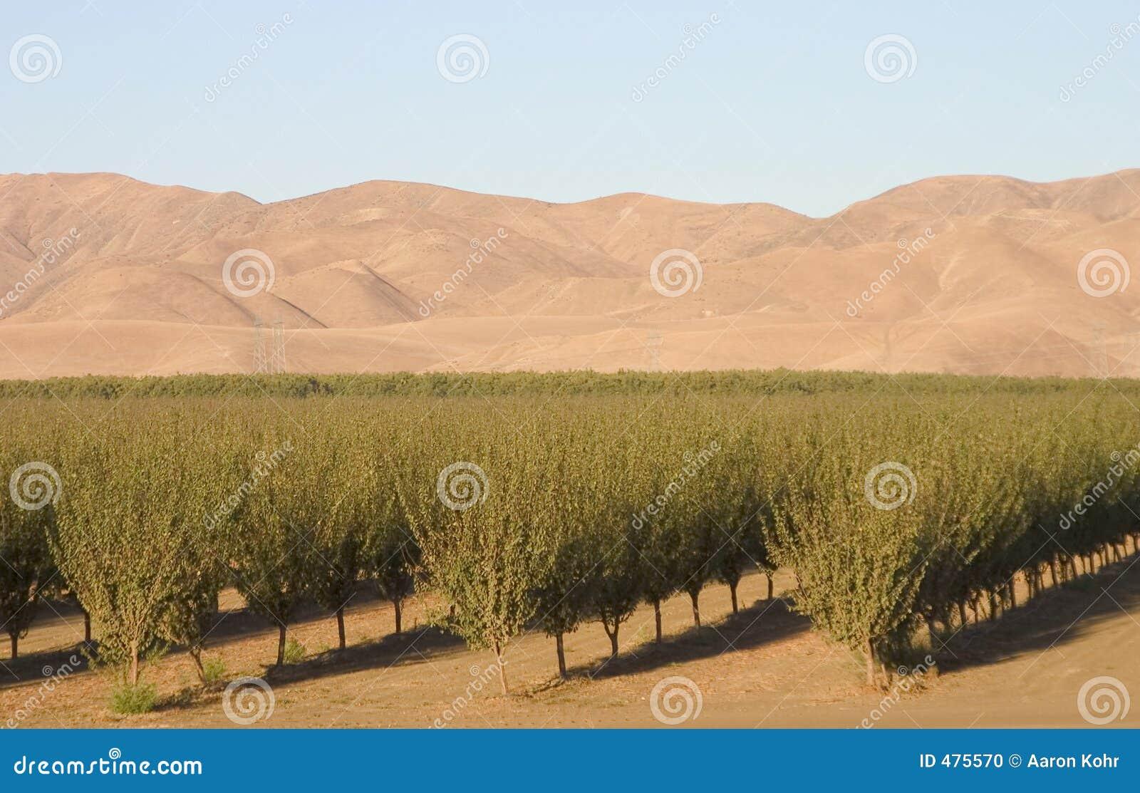 Terres cultivables #6 de la Californie