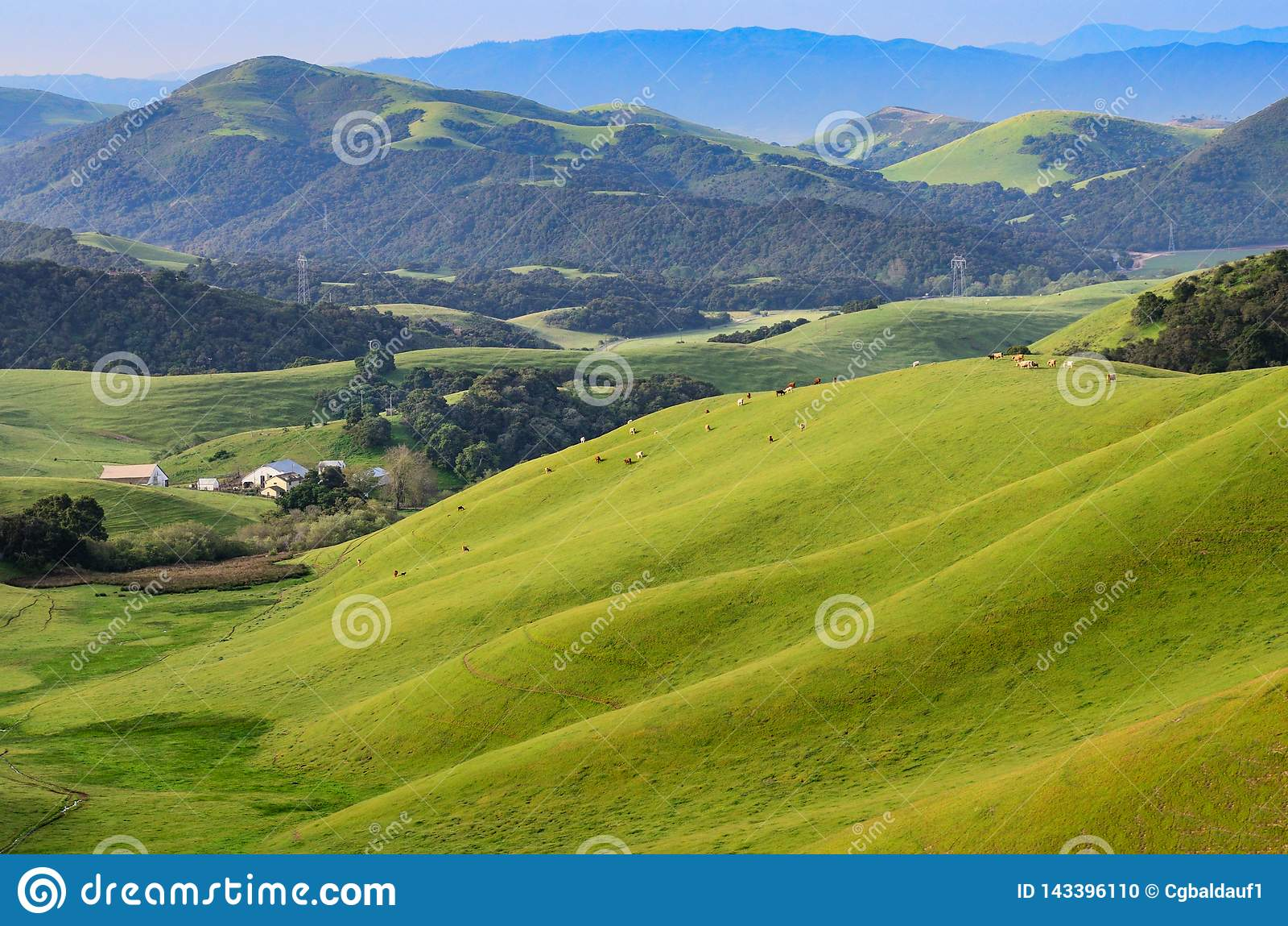 Terres cultivables dans Central Valley de la Californie avec des bétail