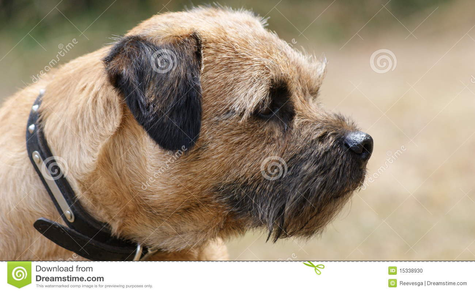 Terrier граници