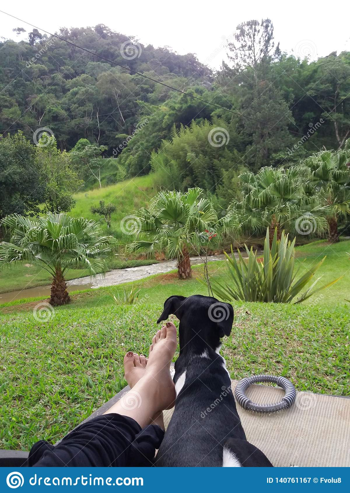 Terrier Brazilian black and white dog - lying quiet at the feet of the owner admiring the nature with beautiful lawn mountains an