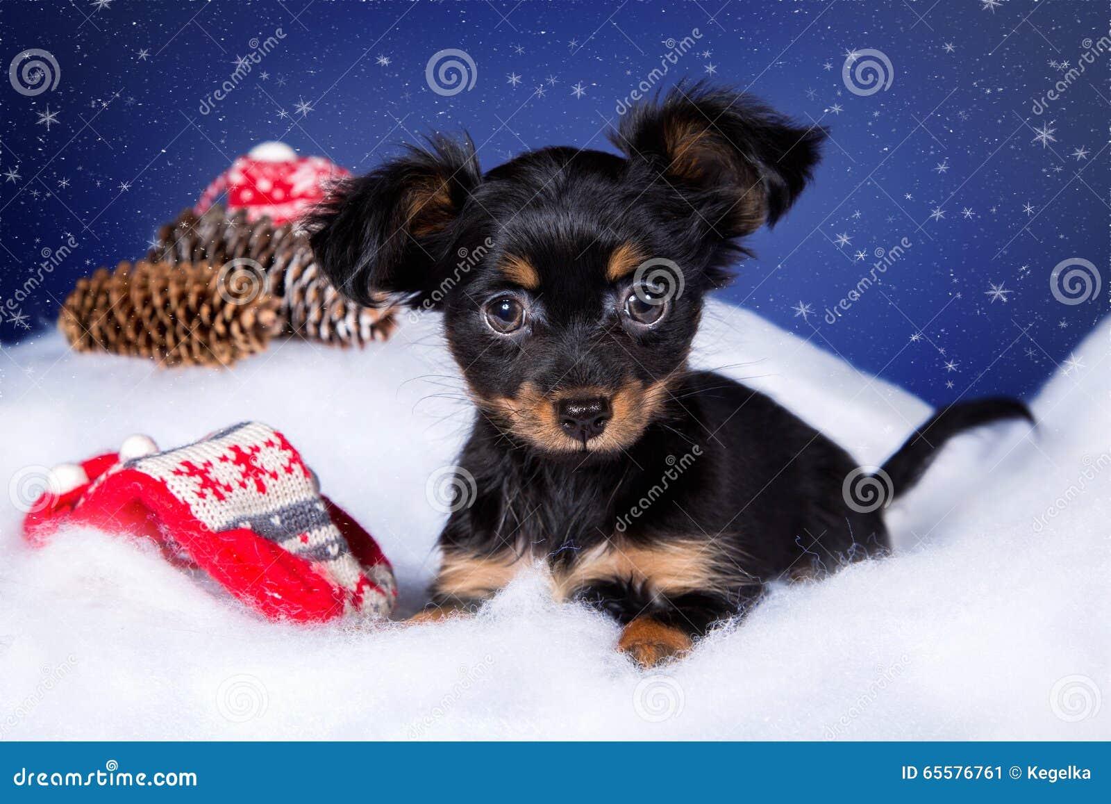 Terrier de brinquedo do cachorrinho que encontra-se na neve