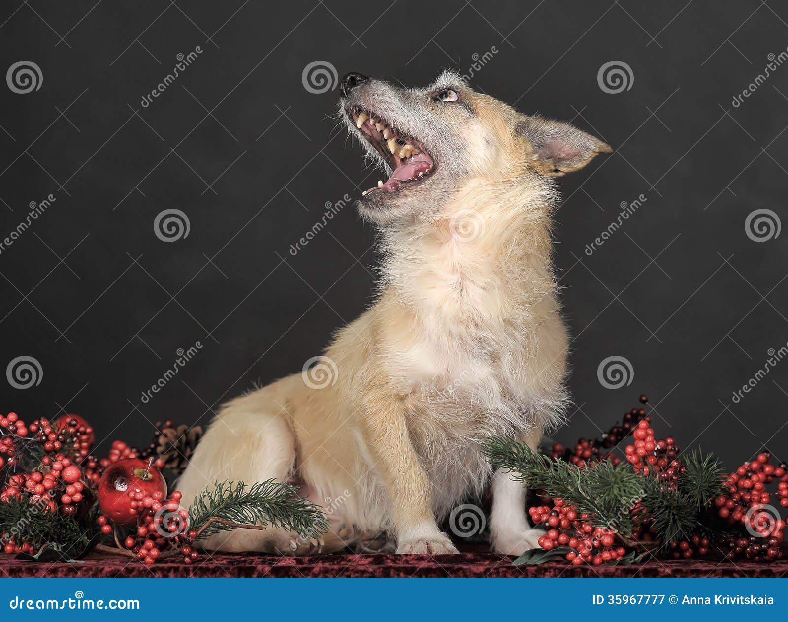 Terrier del híbrido en estudio