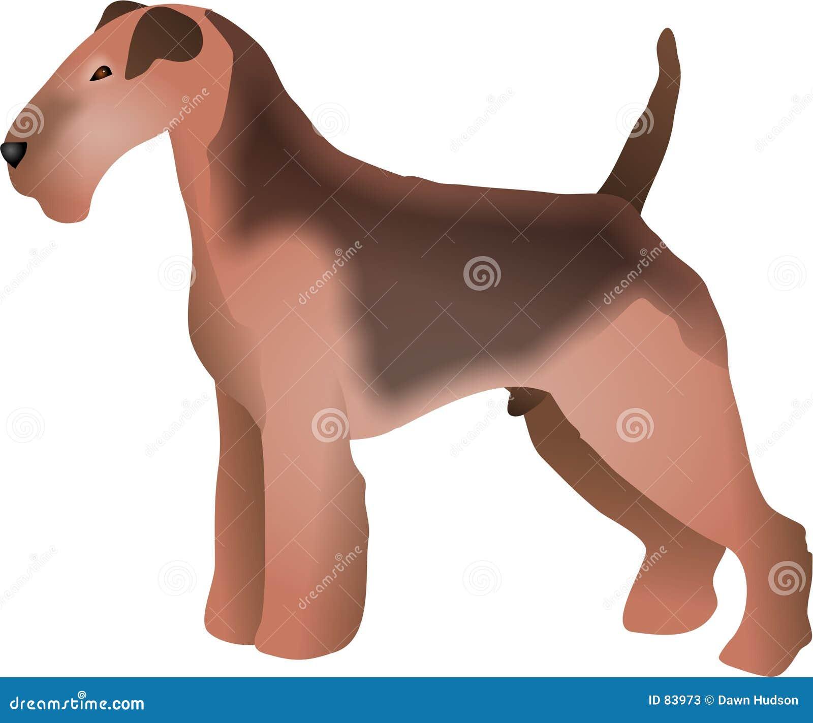 Terrier di lingua gallese