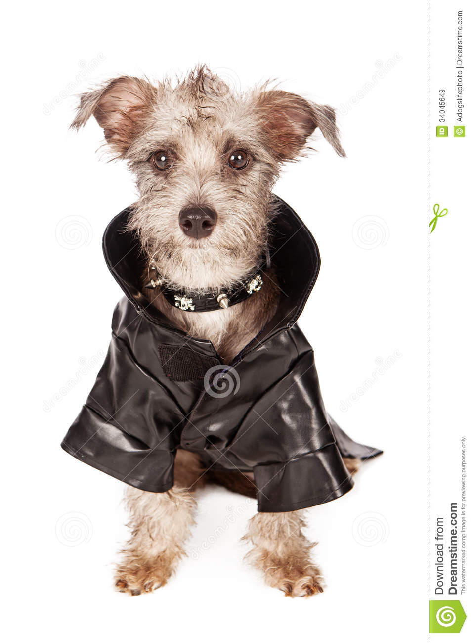 Leather jacket for dogs - Here You Go