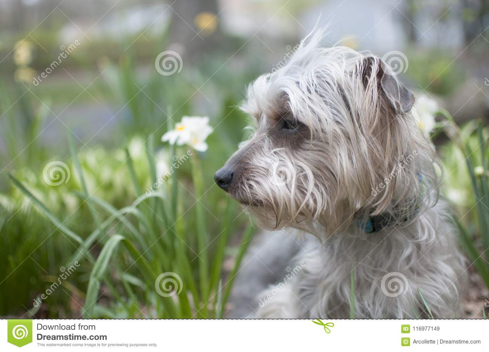 Terrier in Tuin