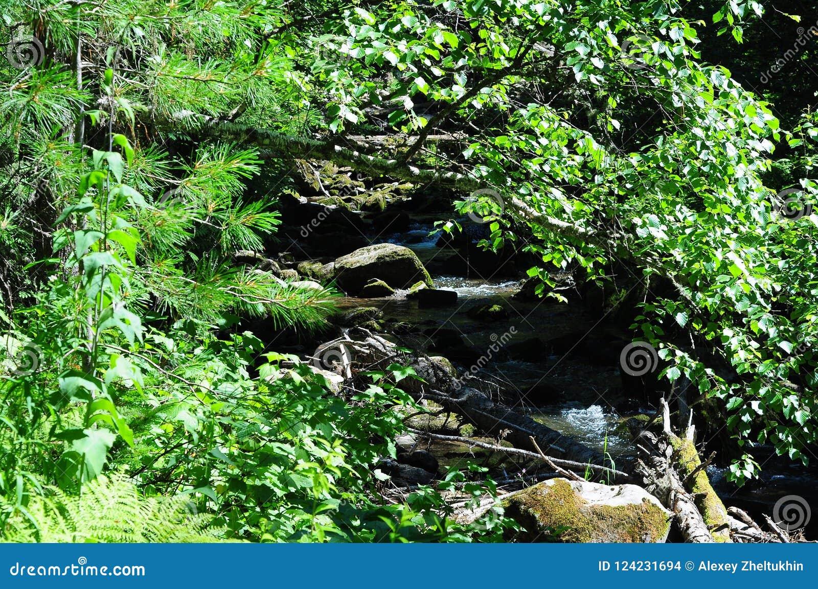 Terzo fiume della torrente montano, la Repubblica di Gorny Altai