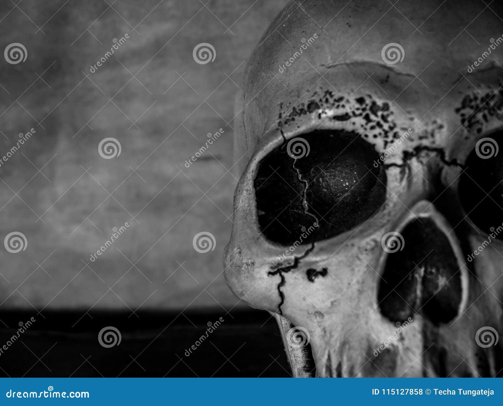 Testa del cranio