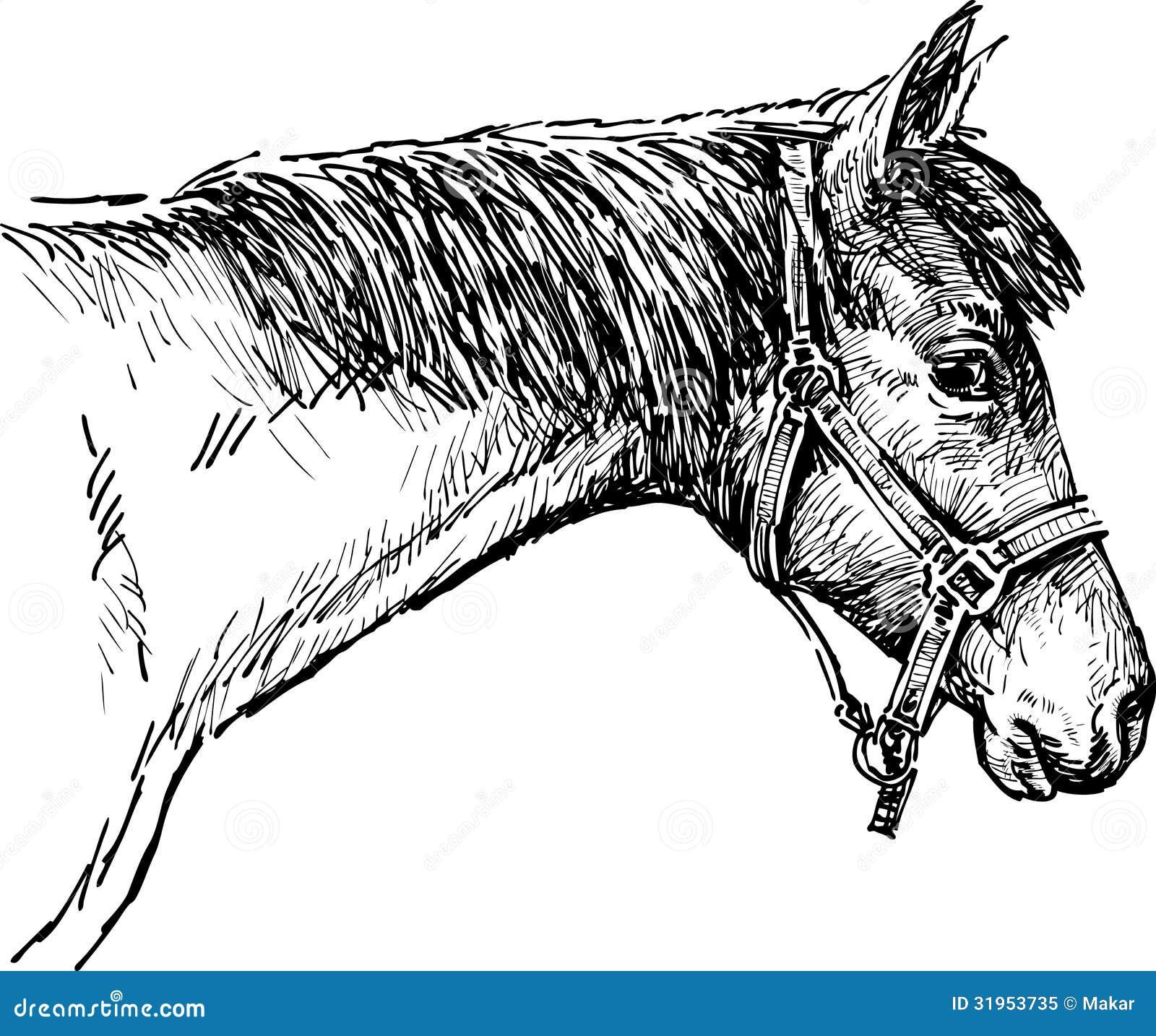 Testa di un cavallo fotografia stock libera da diritti for Immagini di cavalli da disegnare