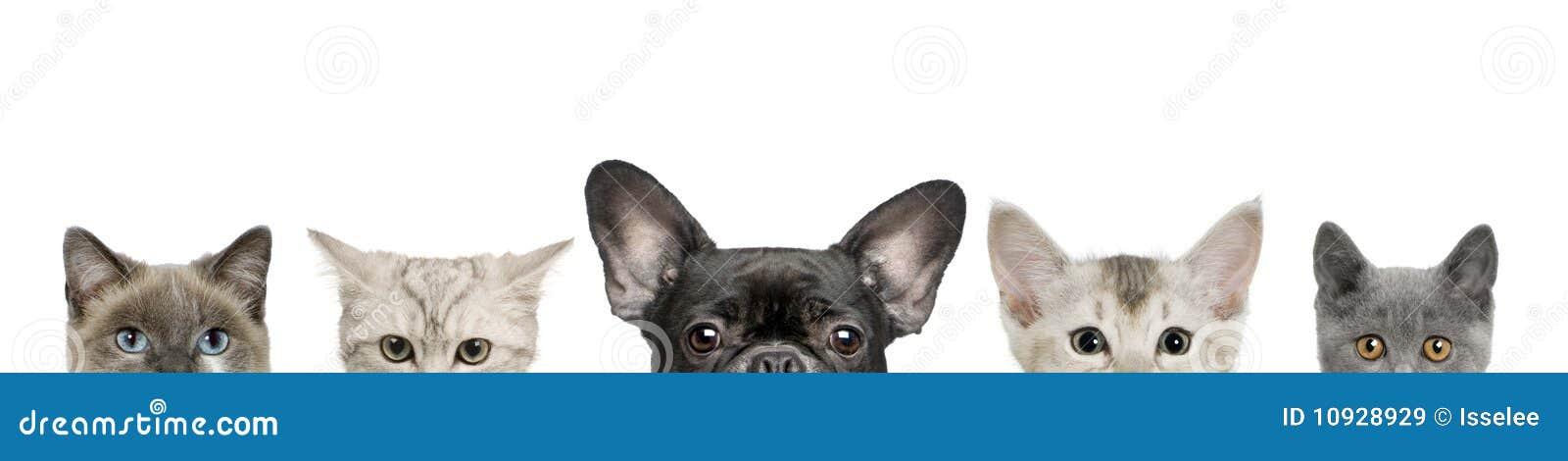 Teste della testa e del gatto di cane