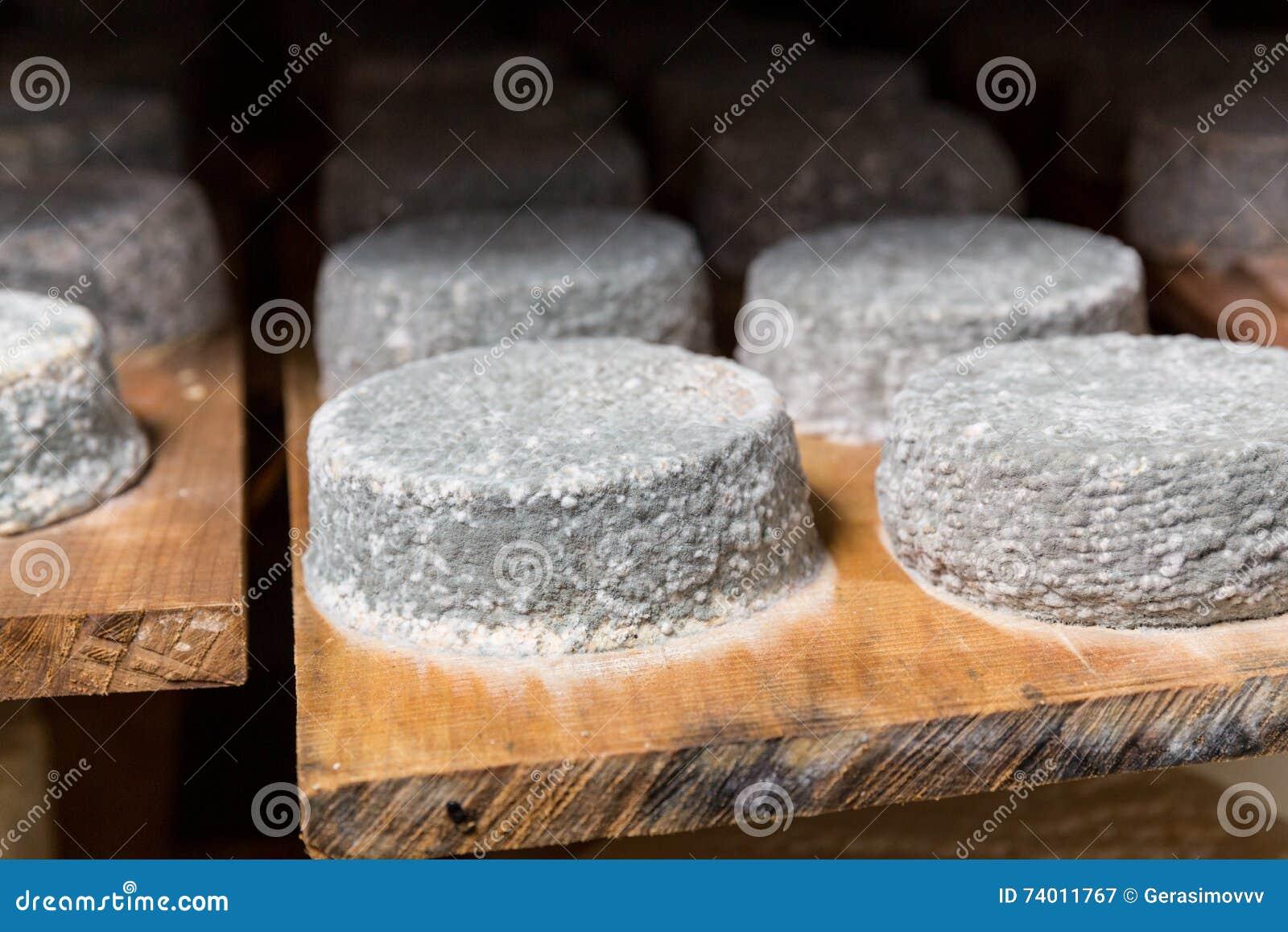 Muffa Bianca In Cantina teste di giovane formaggio di capra con una muffa blu