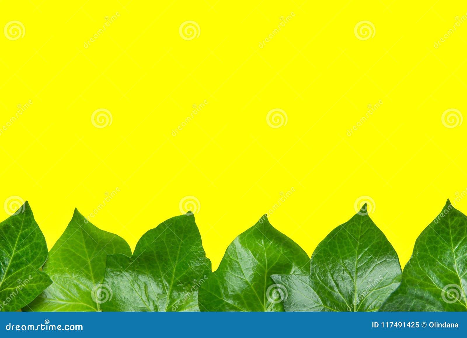 Teste padrão bonito de Ivy Leaves Forming Frame Border verde fresca no fundo amarelo Molde do anúncio do cartaz da bandeira