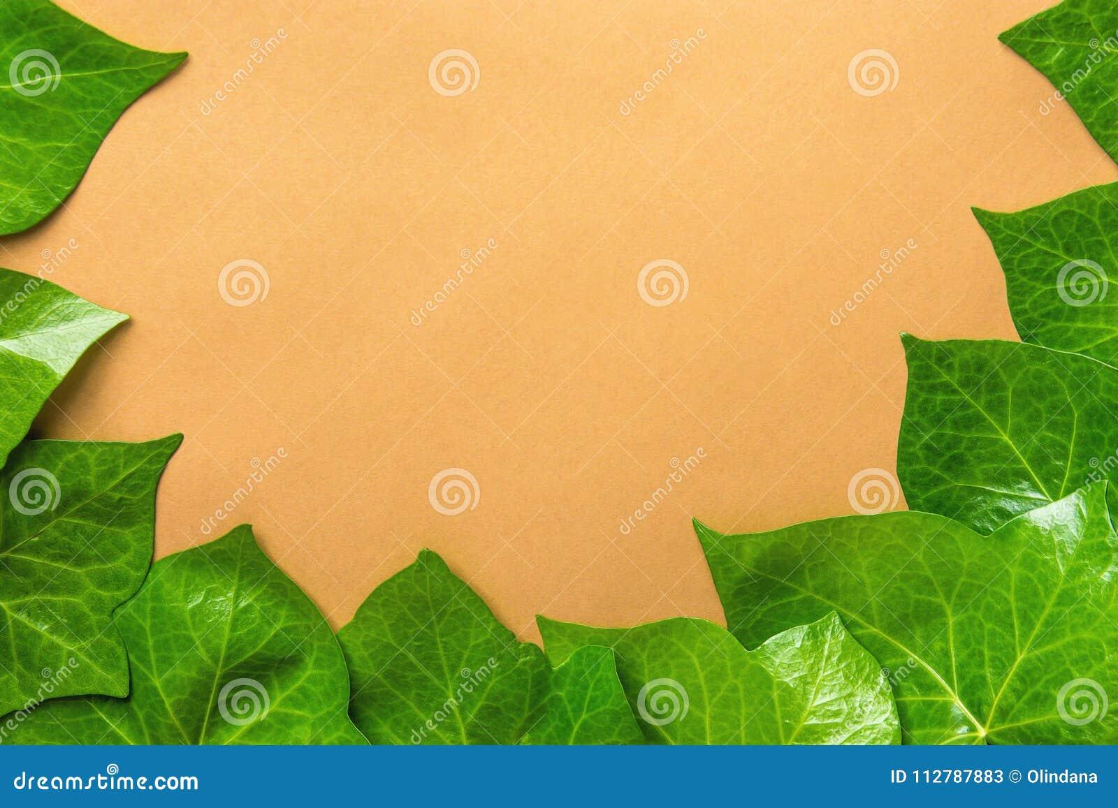 Teste padrão bonito de Ivy Leaves Forming Frame Border verde fresca no fundo bege Cartaz Botanica da bandeira